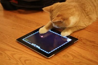 Juegos para gatos :3