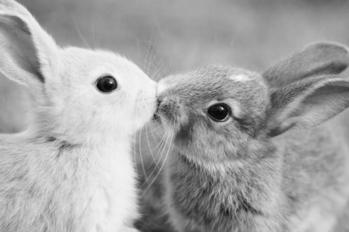 adorable, black and white, bunnies, bunny, cute ...