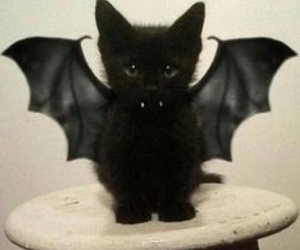 halloween vampire cat