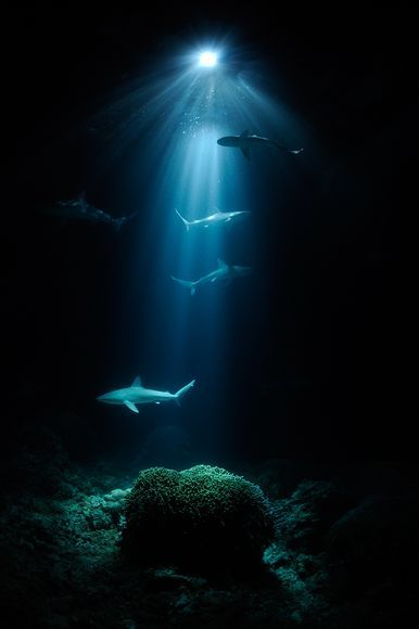 Veolia-best-environmental-nature-pictures-sharks_42862_600x450_large