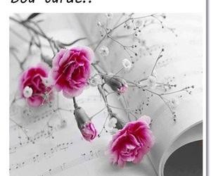 bom dia flores