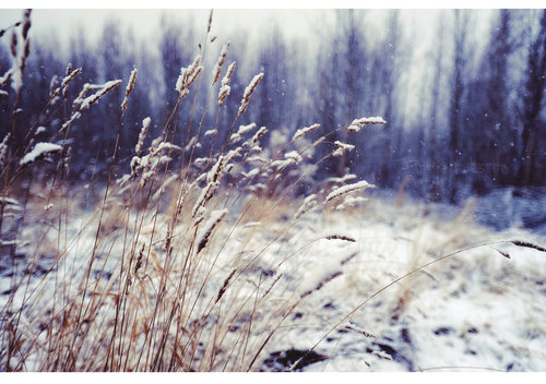 Winter_wind_of_change__by_bunnis-d4l9y9v_large