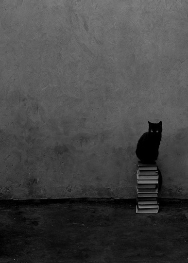 Google Image Result for http://modcatlove.com/wp-content/uploads/2011/03/black-cat-sitting-on-books.jpg