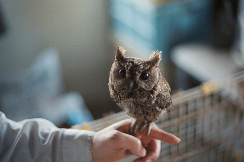 Owl-photo-photography-favim.com-260642_large