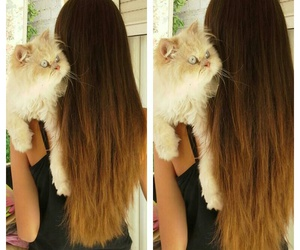 hair ombre cat