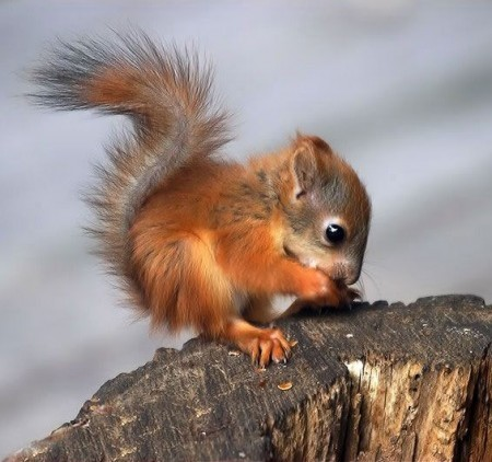 Thelittlestsquirrel-450x422_large