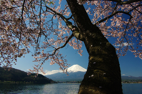 Fuji sakura no Flickr – Compartilhamento de fotos!