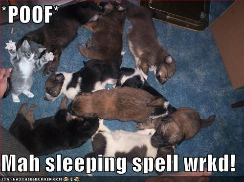 Funny-pictures-kitten-sleeping-spell-on-dogs_large