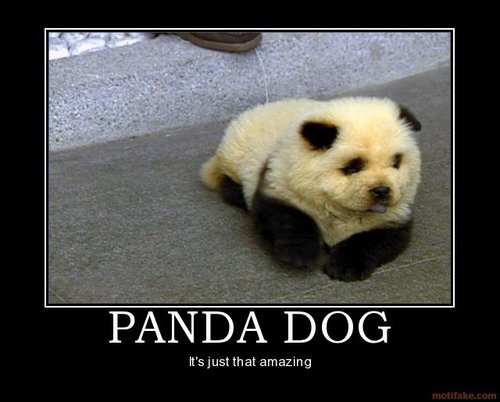 Panda_dog__d_by_masgamer2-d4miaqu_large