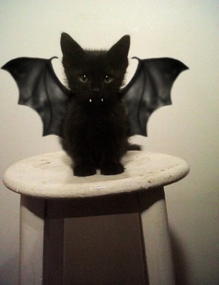 Bat-kitty-213222-320-416_large