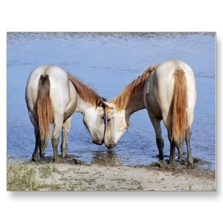Horses_in_love_postcard-p2398834376645786738ss_325_large