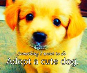 cute adorable dog adopt