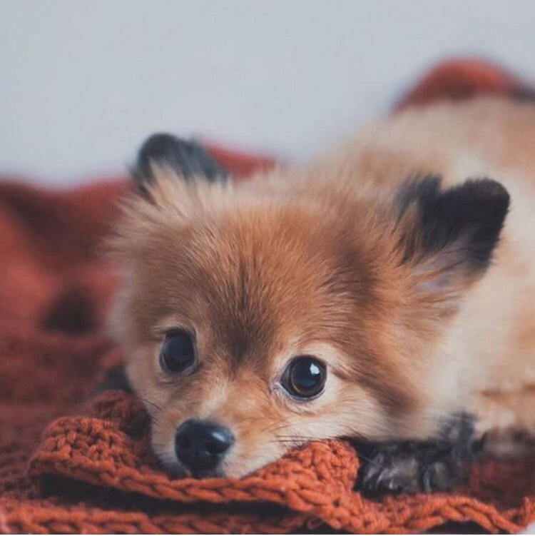 baby, brown eyes, cute, dog, fluffy, fox, friends ...