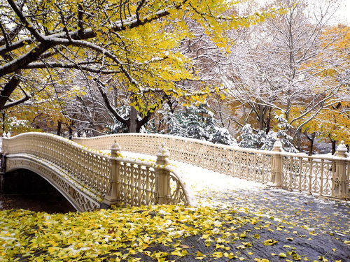 http://data.whicdn.com/images/21668054/Early-Snowfall-Central-Park-New-York_large.jpg