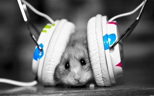 1305819705-headphones-music-lol-headphones-girl-hamster-wallpaper_large