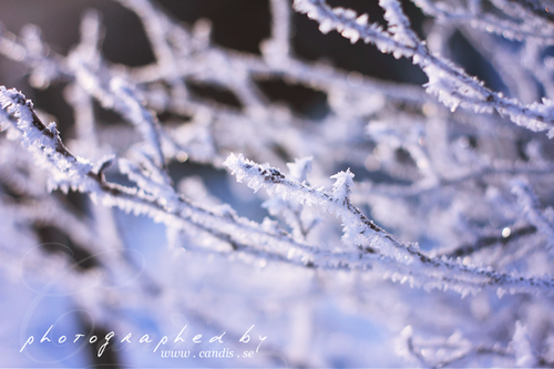 Frost_185975459_large