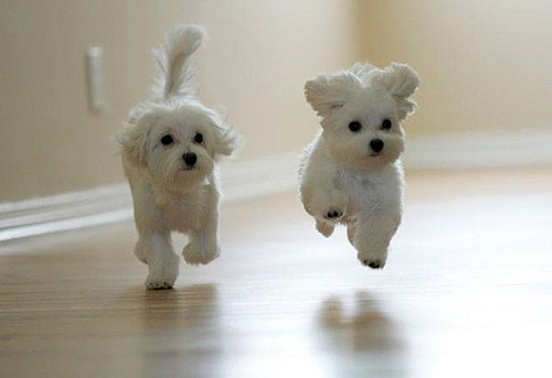 Running-cute-puppies_pg-small_large