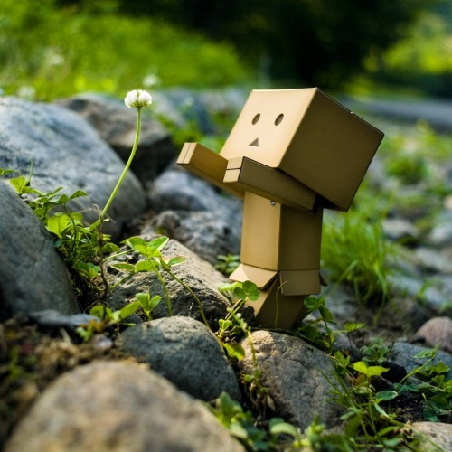 Danboard_third-siting_-arno-500x500_large