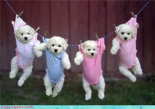 2f7f6c46 7d69 4fb7 a14f 63852aab3a80 large Cutest Baby Animals Post! « Weddingbee Boards