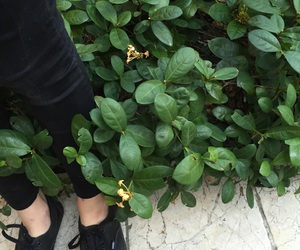 Image result for plant aesthetics