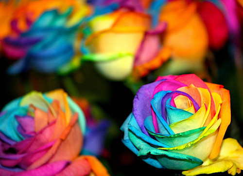 Colorful_roses_by_livelovelaugh09-d3bgtuk_large