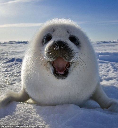 Happy-seal_large