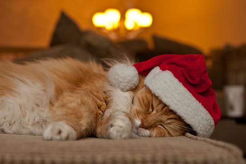 cat, christmas, cute, enjoy, lights - inspiring picture on Favim.com