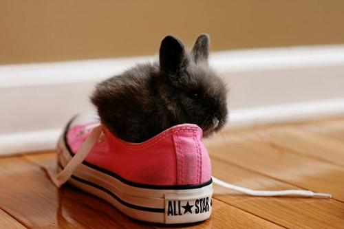 Bunny-in-a-shoe_large