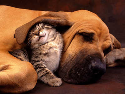 Cute-kitty-dog-friends_large