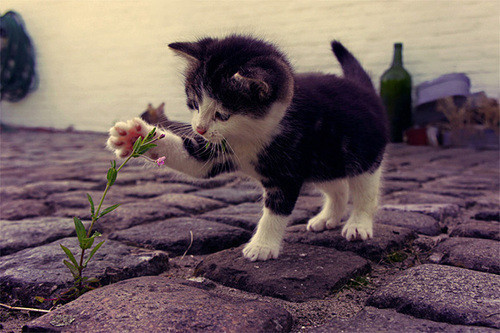 Cat-cute-flower-girl-favim.com-283633_large_large