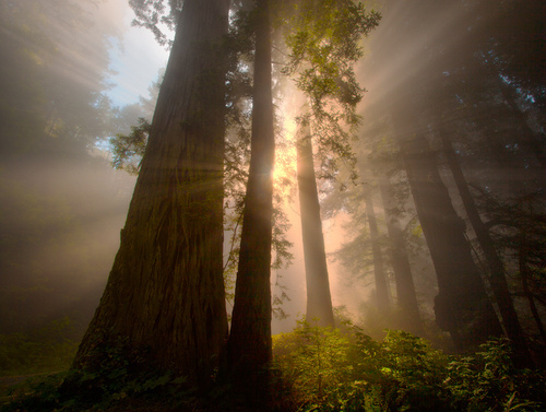 Beauty Fog Forest God Green Light Love Sunshine Sun Nature - PicShip