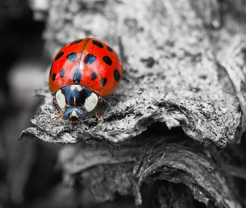 Observing Nature || ladybird ✿⊱╮