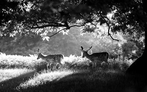 Observing Nature || DeeR