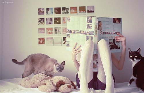 Bedroom-book-cats-gabriela-minks-kitties-favim.com-308384_large