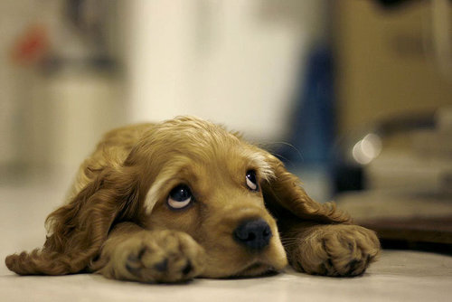 Sad_dog+%2525281%252529_large