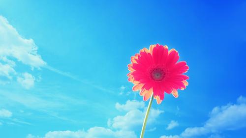 Fondos de pantalla de la naturaleza, cielo, verano, flor, flores ...