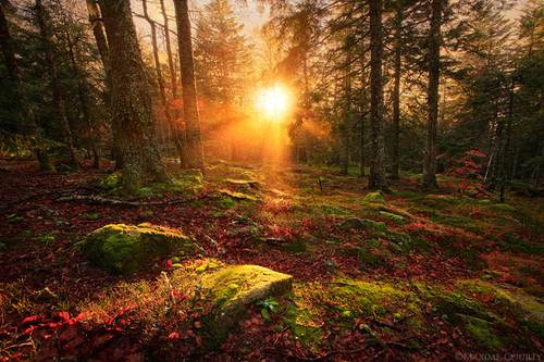 Woodland Enchantment by ~MaximeCourty on deviantART