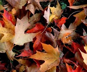 autum leaves falling :3