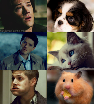 Aww-cass-castiel-cat-cute-dean-favim.com-103874_large