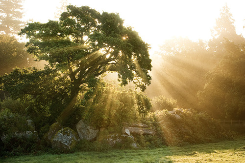 Oak_sunshine_by_alex37_large