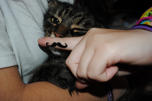 Bigode-cat-cute-igottapeenow.tumblr.com-mustache-favim.com-95901_large