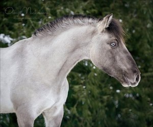 love want horse