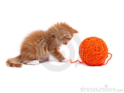 1242948674Df4CGM large Stock Photos: Kitten playing with ball of wool