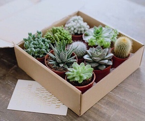 plants