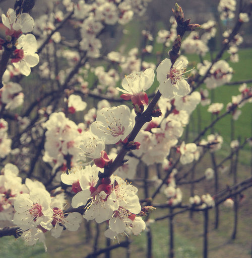 Spring_days__by_missayleen_large