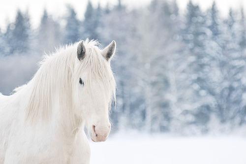 Cavalo-branco_large