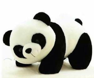 pandas bears china