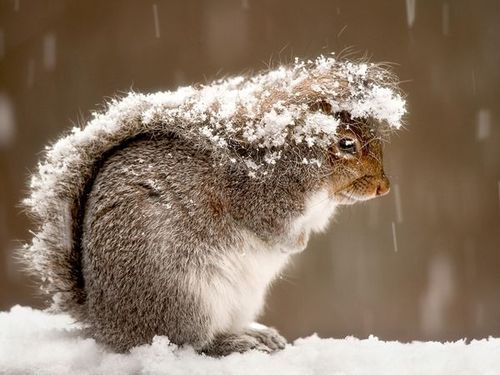 Squirrel-snow-storm_47916_600x450_large