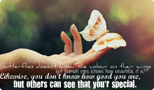 jamali butterflies