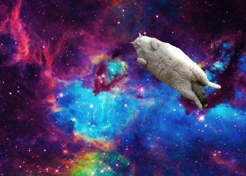 awesome cat fat space Favim.com 334651 large awesome, cat, fat, space   inspiring picture on Favim.com